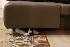Hidden puppy