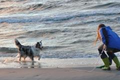 Chita w morzu owczarek australijski hodowla all embracing