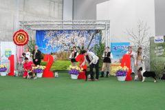 Opole-3-hodowla-owczarka-australijskiego