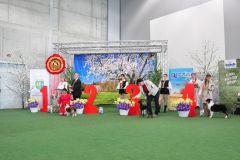 Opole-7-hodowla-owczarkow-australijskich