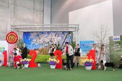 Opole-8-hodowla-owczarkow-australijskich