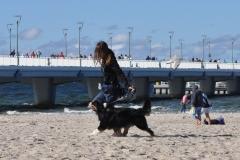 pancho run hodowla all embracing owczarek australijski
